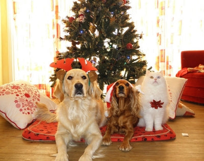 How to keep your dog safe and happy this Christmas