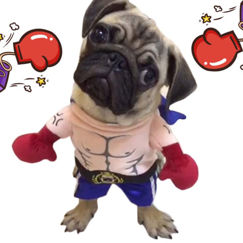 Funny Boxer Costume for Pets 40% Off