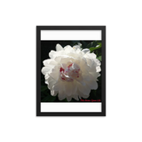 Framed poster - Peony