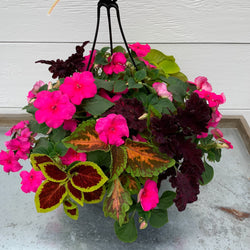 Impatiens Mix with Coleus
