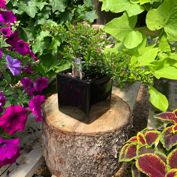 "4.5"" Black Ceramic Pot"
