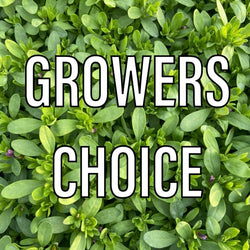 "12"" Growers Choice"