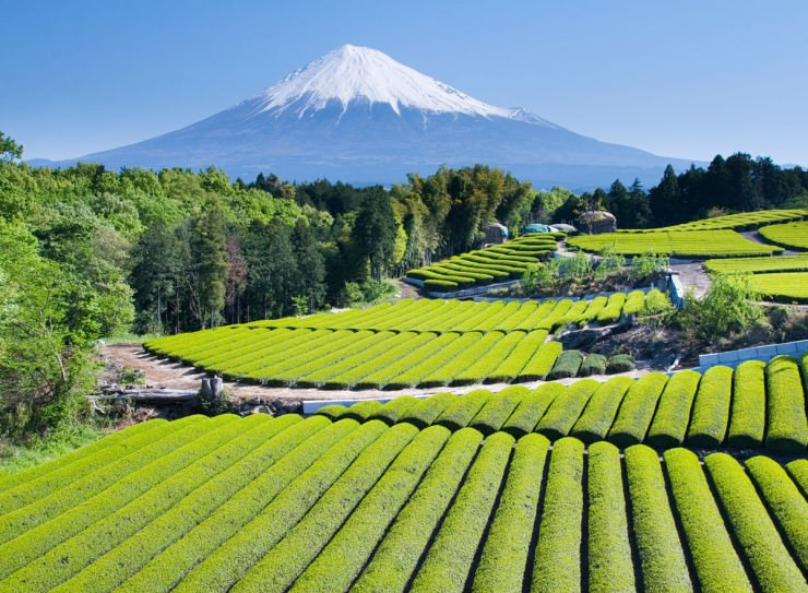 Guide: Intro To Japanese Green Teas