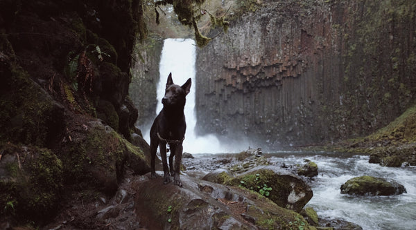 Essential Guide for Hiking or Backpacking with Your Dog!