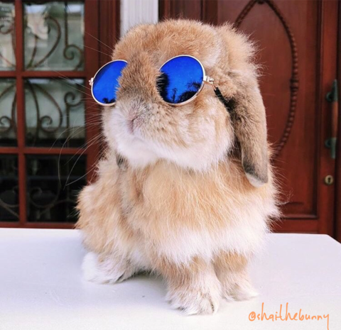 Adorable Bunny Mini-Pet Sunglasses
