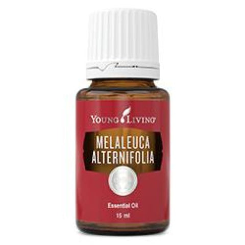 Young Living Essential Oils | Melaleuca Alternifolia (Tea Tree) 15Ml Young Living Oils - Singles
