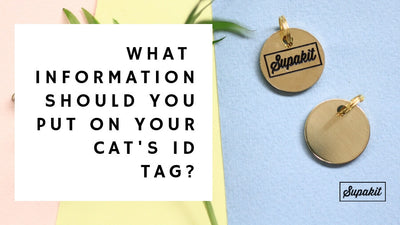 What Information Should You Put On Your Cat's ID Tag?