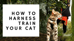 /blogs/news/how-to-harness-train-your-cat