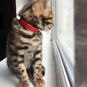'Scarlet' Red Leather Kitten Collar With Bell