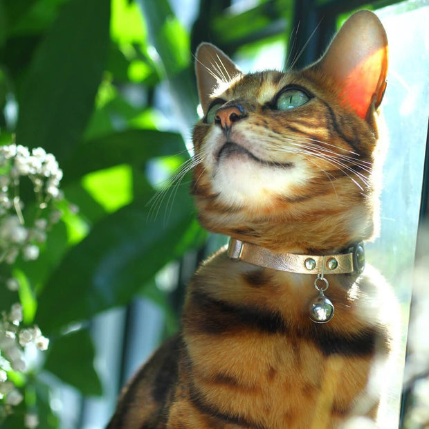 Rose Gold Leather Cat Collar - Supakit®