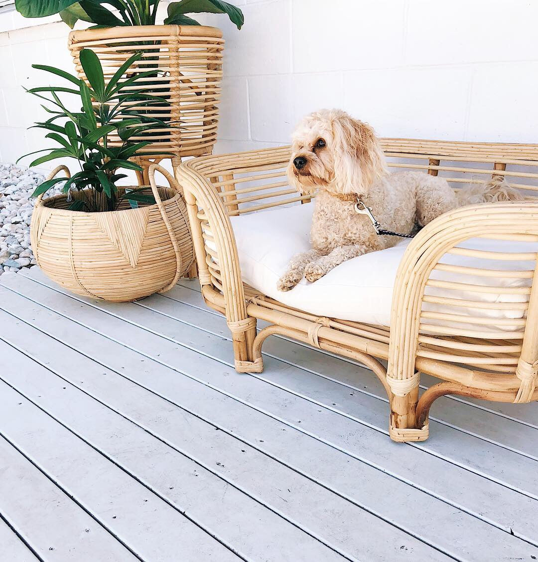 Rattan Dog Bed Hello Trader