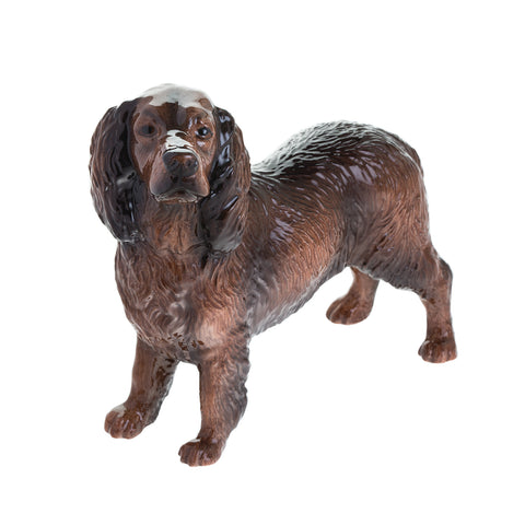 Cocker Spaniel (Chocolate)