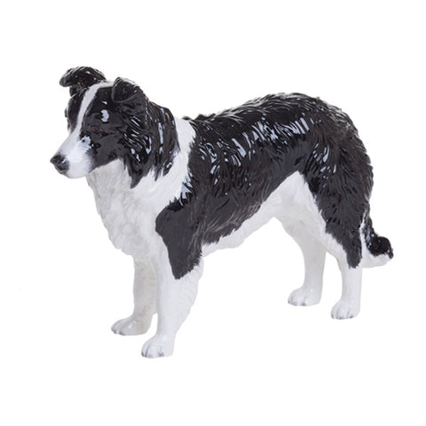 Black & White Border Collie