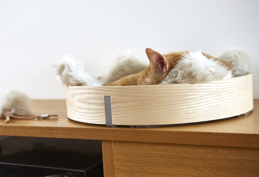 Cat Bed Anello