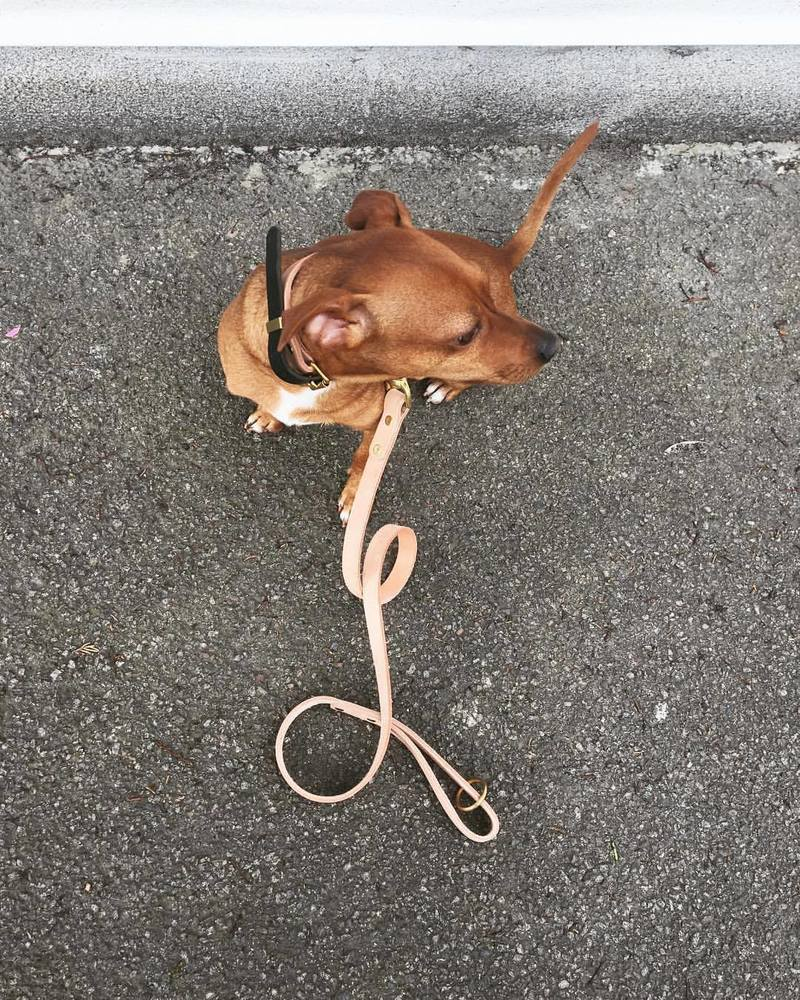 Dog Lead Classic Leather