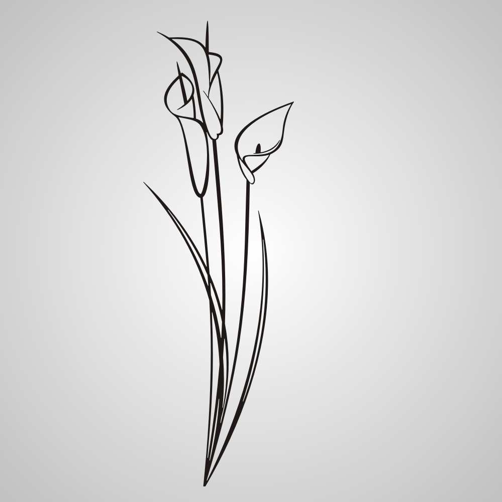 NATURAL CALA LILIES SKETCH  Big & Small Sizes Colour Wall Sticker Shabby Chic 'Flora3_61'