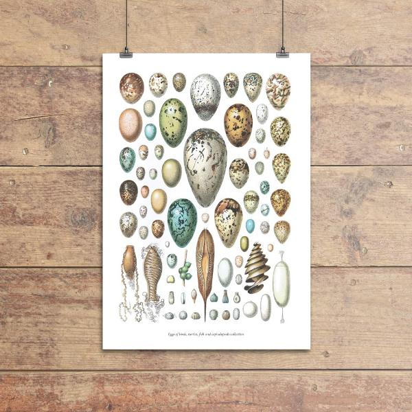 """Cephalopods & eggs"" plakat (A4)"