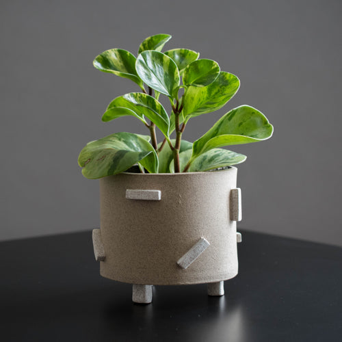 White Dash Pot