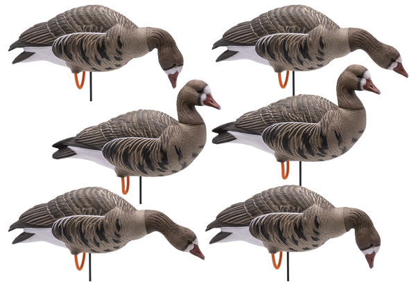 Final Approach Speckle Belly Decoy - 6 Pack