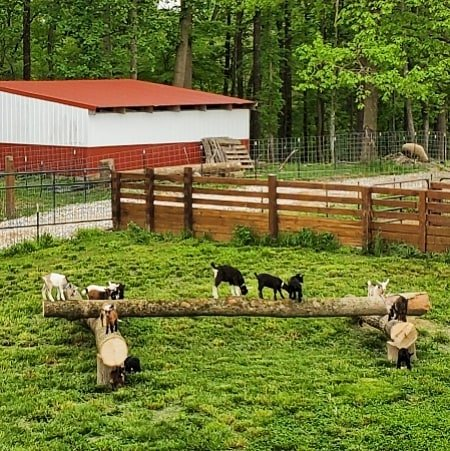 Baby Goat Play Yard