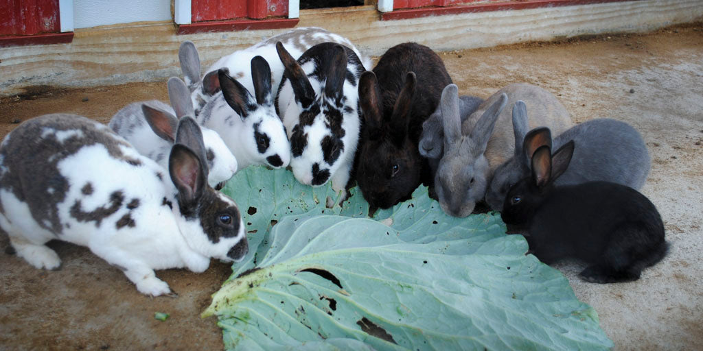 gardening with rabbits