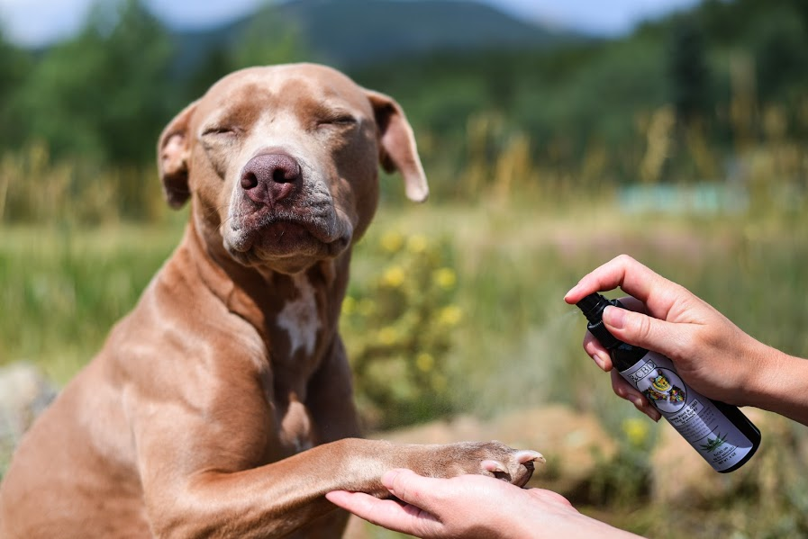 cbd-first-aid-spray-for-pets-4