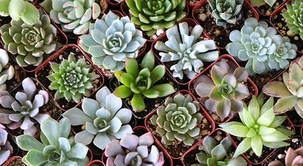 Stress Free Succulent Care
