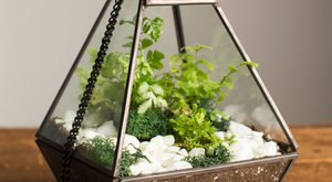 Terrarium Crash-Course