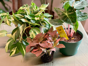 How to Control Gnats in Your Houseplants