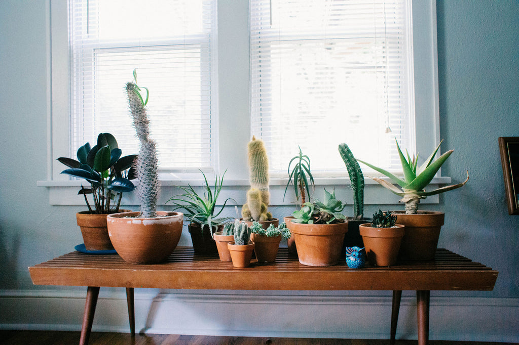What are Houseplants?