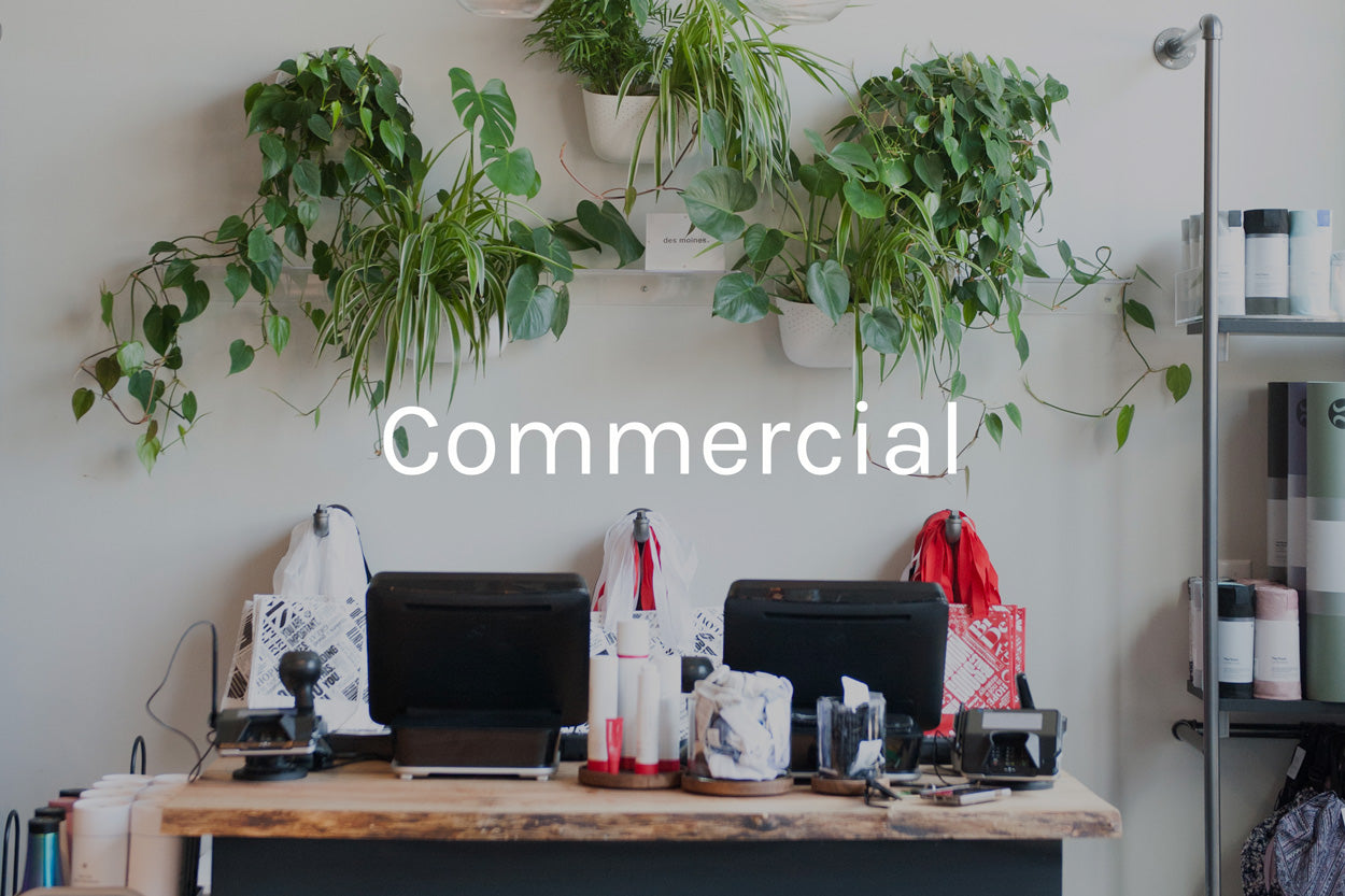 commercial plant styling