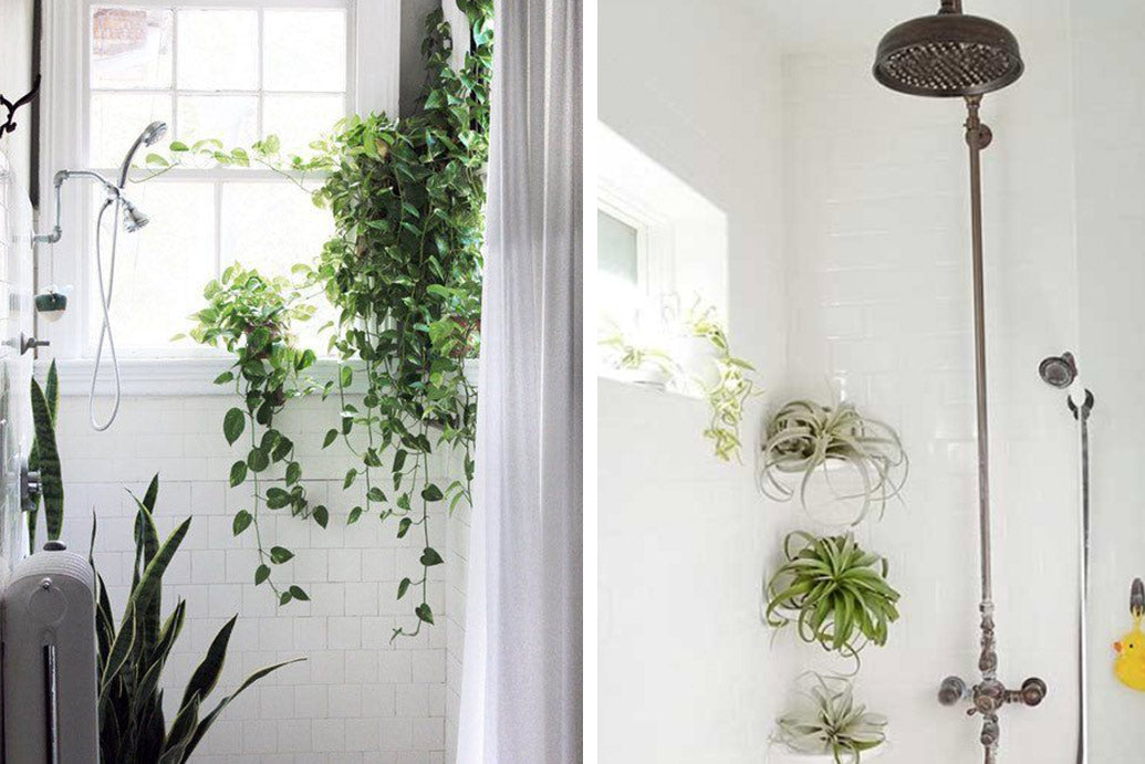 Plants That Will Thrive In Your Bathroom Art Terrarium Custom Plants For Bathrooms