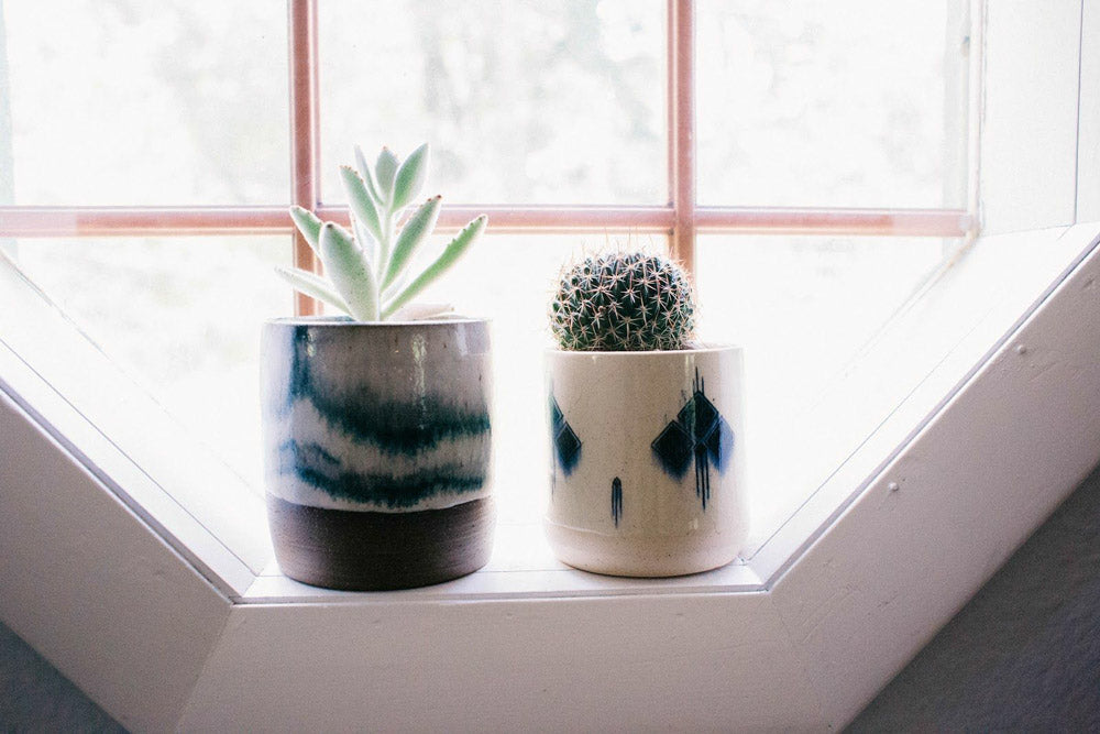 Succulent and Cacti in pots on windowsill