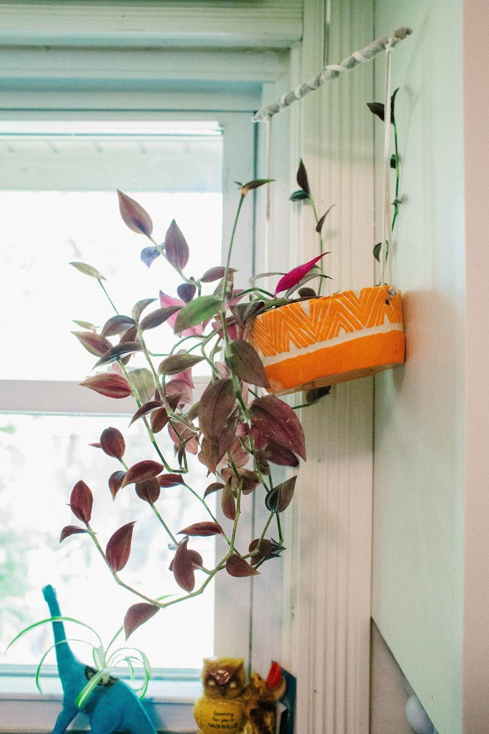 Hanging pot with plant