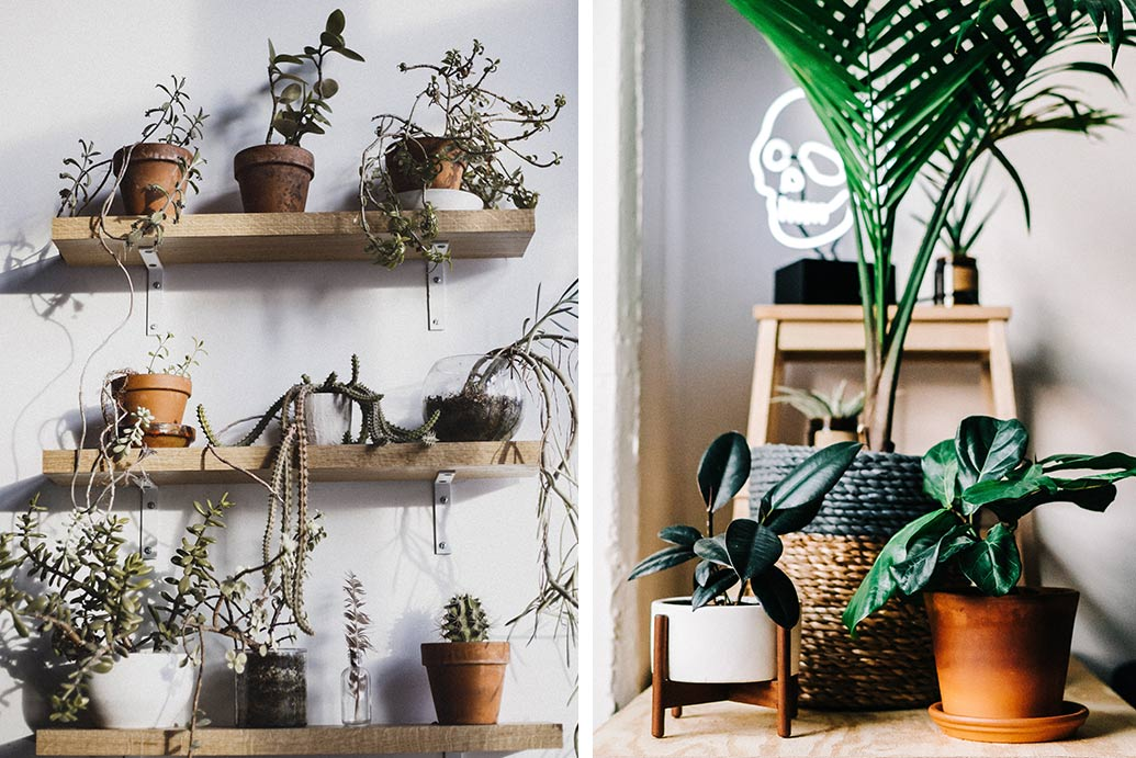 indoor potted plants on wooden shelves