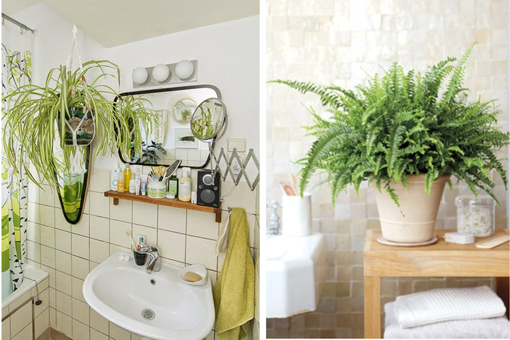 Plants That Will Thrive In Your Bathroom Art Terrarium Extraordinary Plants For Bathrooms