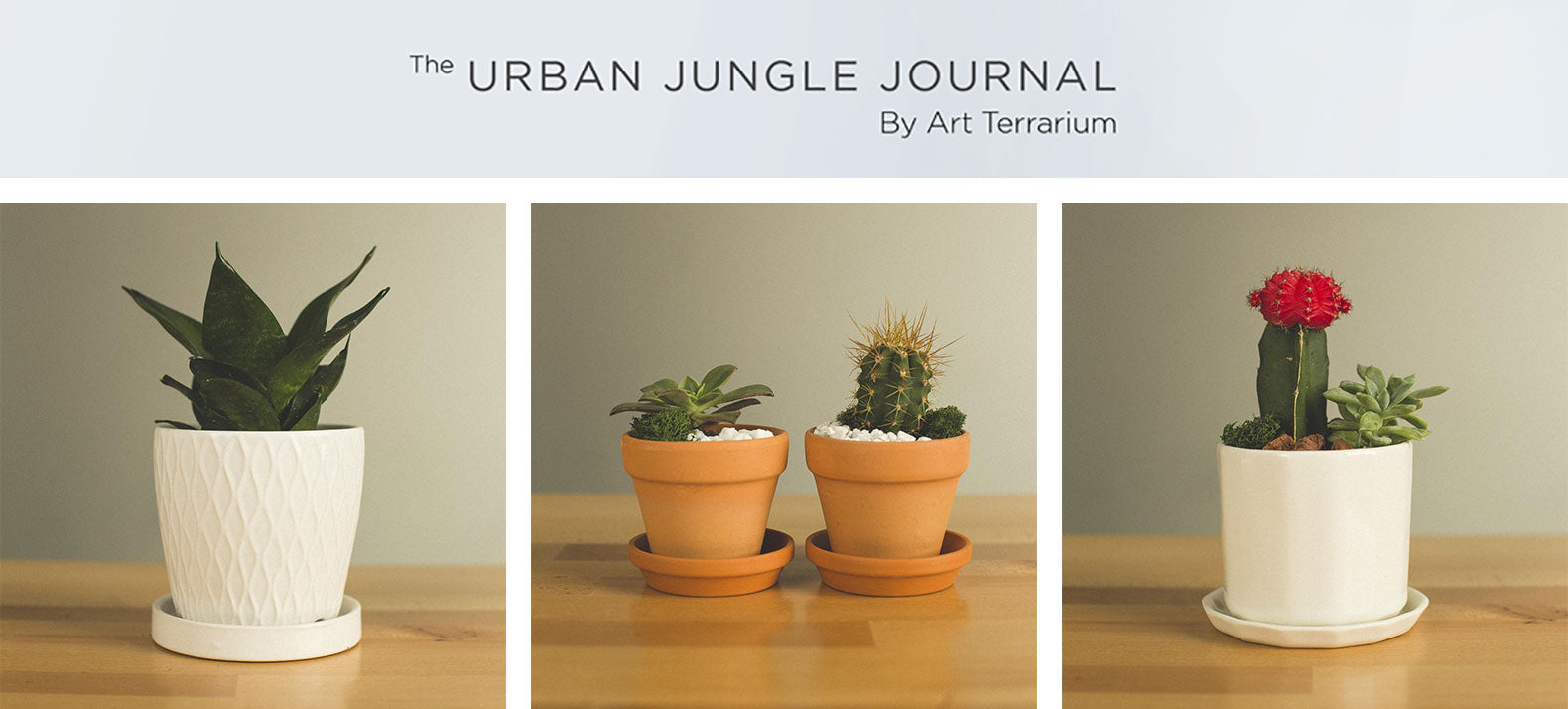 Art Terrarium holiday gifts