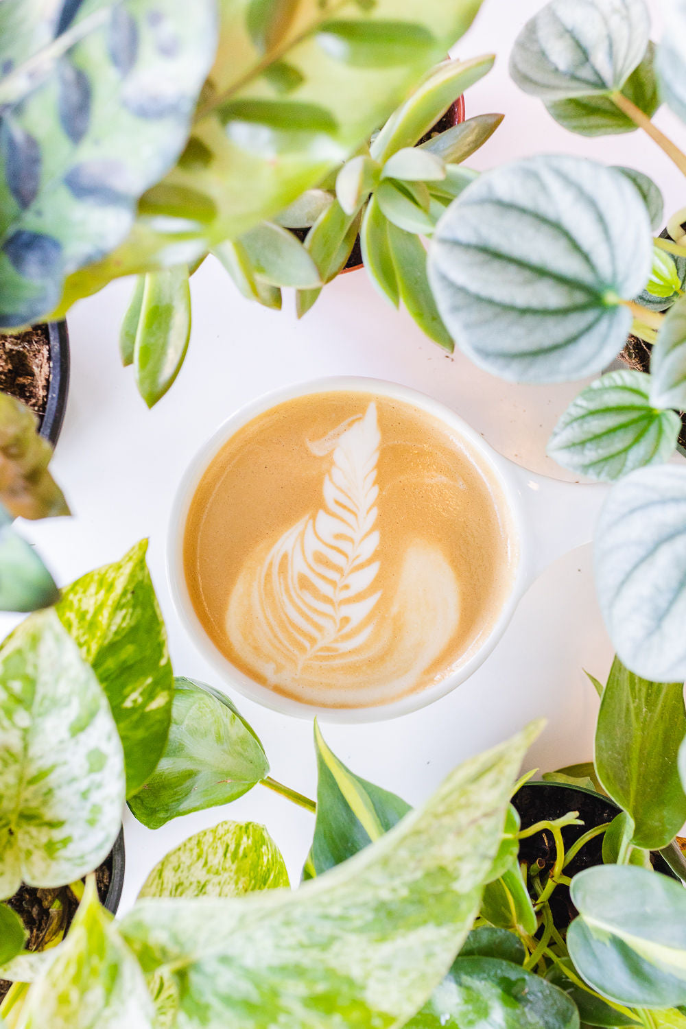 Latte surrounded by houseplants