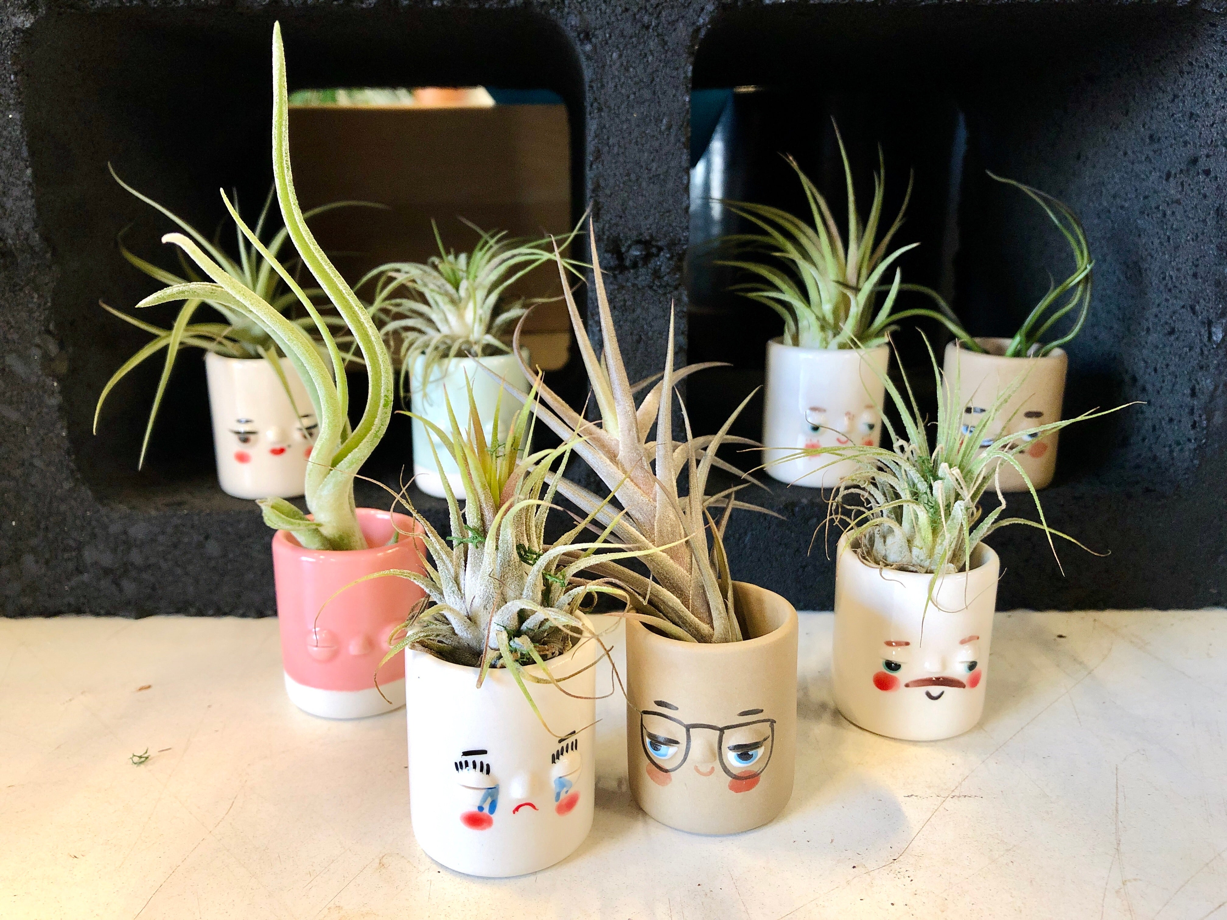 Little Friends Air Plant holder (Air plant included)
