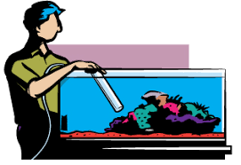 Aquarium Cleaning and Maintenance