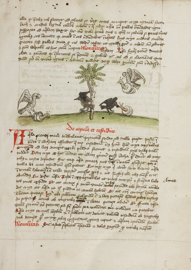 Unknown:An Eagle Seizing a Snail; A Crow Pecking at a Snail,16x12