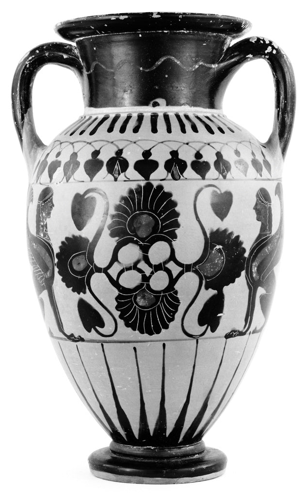 Unknown:Chalcidian Amphora,16x12