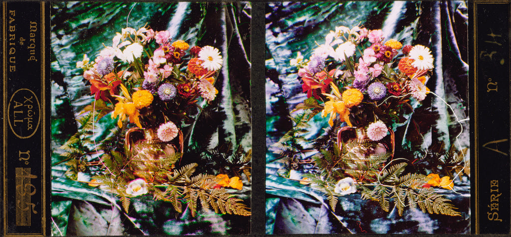 Lumière Brothers:[Still life of flowers and ferns],16x12
