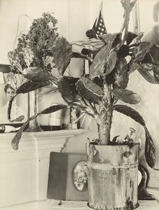"Walker Evans:The Cactus Plant/[Interior Detail of a Portugue,16x12""(A3)Poster"