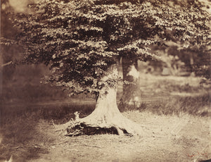 "Gustave Le Gray:[The Beech Tree],16x12""(A3)Poster"