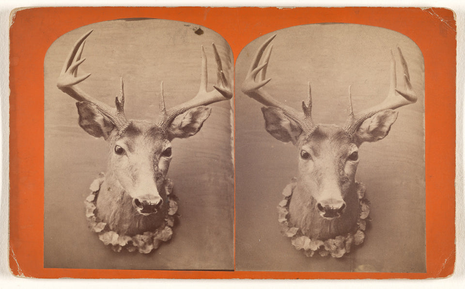 "Unknown:[Taxidermic deer head],16x12""(A3)Poster"