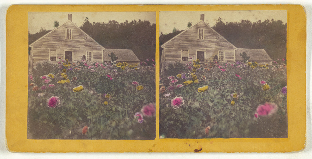 Unknown maker, American:[Poppy field Cabbot Vt.],16x12