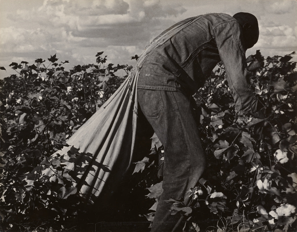 Dorothea Lange:Stoop Labor in Cotton Field, San Joaquin Vall,16x12