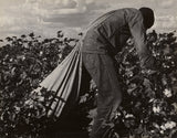 "Dorothea Lange:Stoop Labor in Cotton Field, San Joaquin Vall,16x12""(A3)Poster"