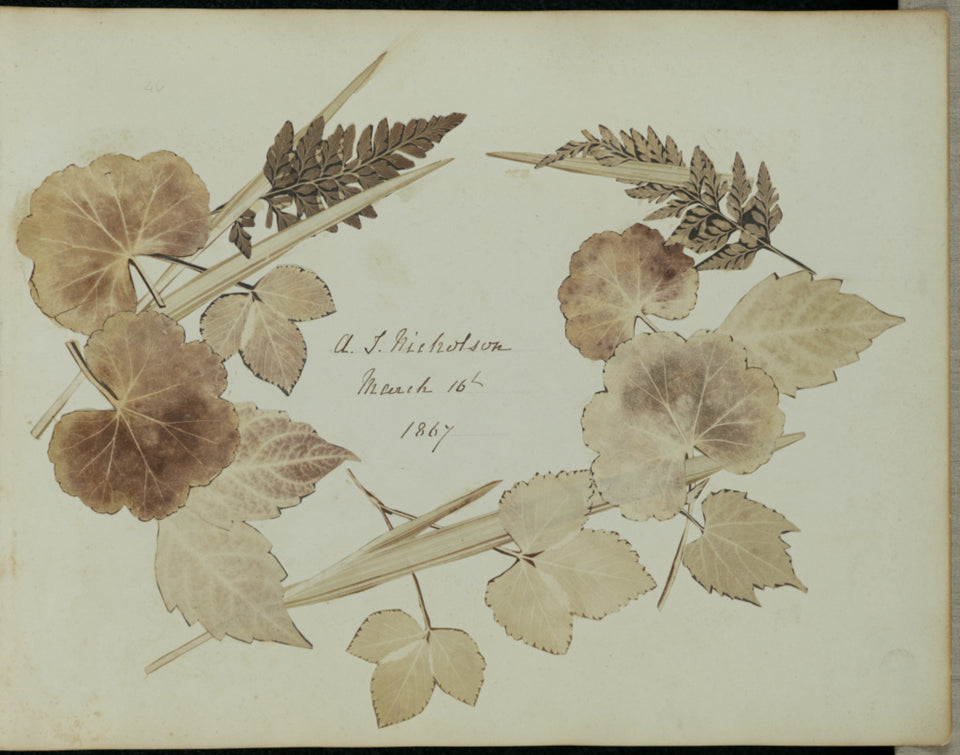 "John Wheeley Gough Gutch:[Wreath of leaves and branches],16x12""(A3)Poster"
